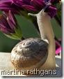 snailbymartina rathgens